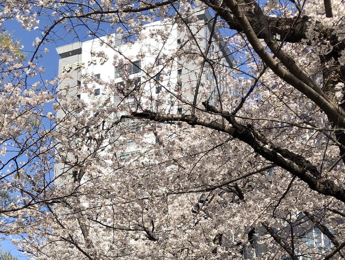 卒業式に桜満開。ハットを飛ばしてぱっとしよう。